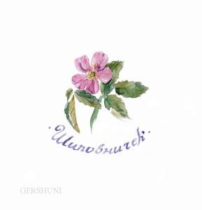 Заставка.Акварель,рукописный шрифт.